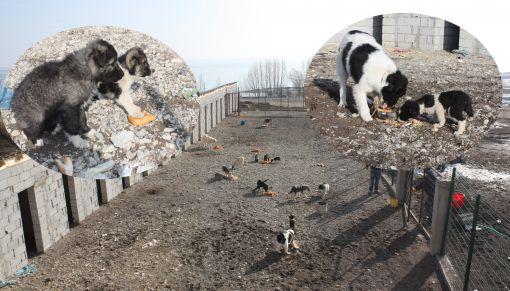 Ahlat Belediyesi Hayvan Barınakları İnşa Etti