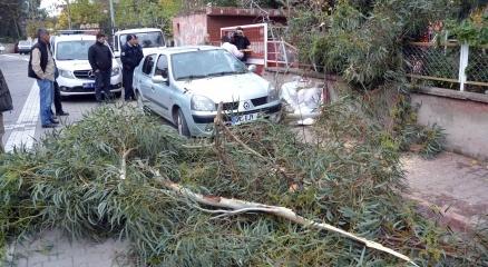 Adana'da şiddetli rüzgar hayatı olumsuz etkiledi haberi
