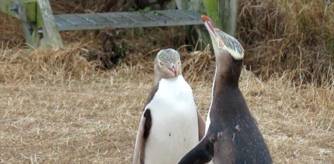 Anti-sosyal penguen hoiho 'Yılın Kuşu' yarışmasında ipi gögüsledi.